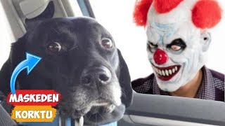 Dog\'s reaction to its owner\'s face mask