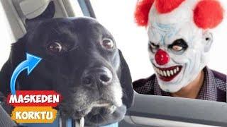 Maskeden Korkan Köpekler! | [2018 Derleme] ● Eğlenceli Anlar