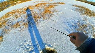 Ловля окуня в тростнике зимой