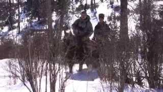 Промысловая охота на соболя (Алтай)
