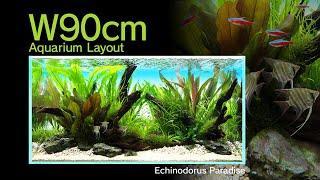 [ADAview] Echinodorus Paradise - powrót do korzeni?