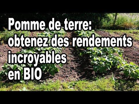 , title : 'Comment planter des pommes de terre: Obtenez des rendements incroyables en BIO
