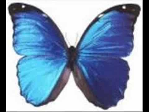 Free The Butterfly