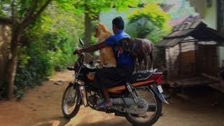 Pet dog's bike ride with master
