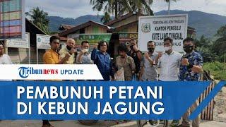 Pelaku Pembunuhan di Kebun Jagung Aceh Tenggara Ditangkap, Sempat Sembunyi di Pegunungan
