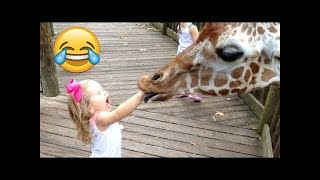 تحميل و مشاهدة أروع المقاطع المضحكة و الممتعة لحيونات يلعبون مع الأطفال في حديقة الحيوان || دقائق من المتعة MP3