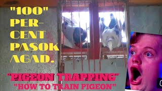 Tips.how to train pigeon trapping 100 percent pasok agad😄