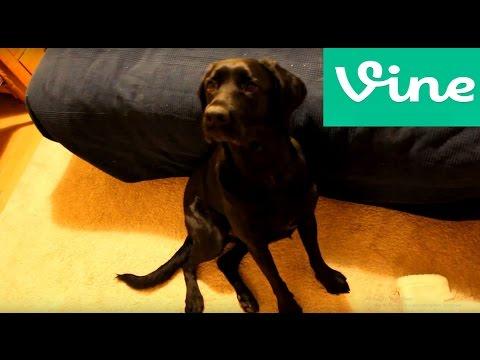 Pes-VINE#46