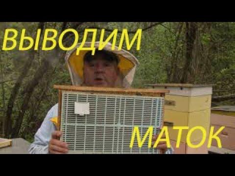 Вывод маток по методу Геннадия Степаненко .