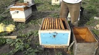 когда можно ставить вощину в семью пчел? - весна на пасеке