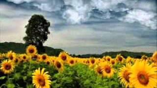 Nicolas Jaar - Sunflower