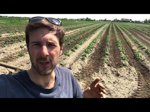 , title : 'Potatoes vs weeds! 🚜🥔🌾