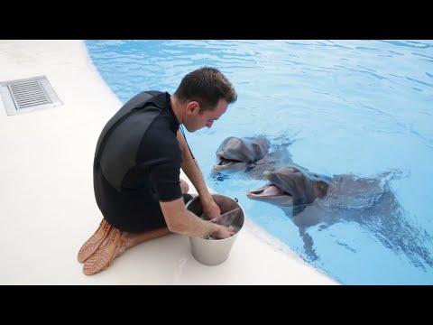 Dieta Delfines