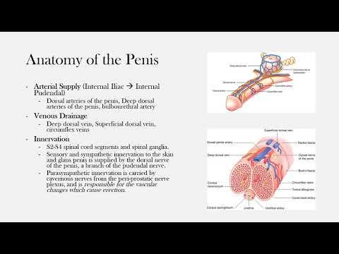 Plante care afectează erecția