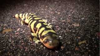 Metamorphosis: Amphibian Nature
