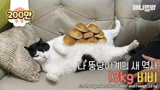 하다하다 이제 고양이가 다이어트 자극함