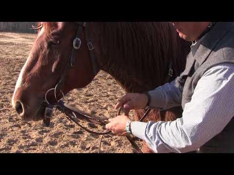 Steve Lantvit Show Sneak Peek - The German Martingale, A Useful Tool