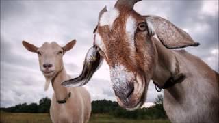 Zvířátka - zvuky zvířat pro děti
