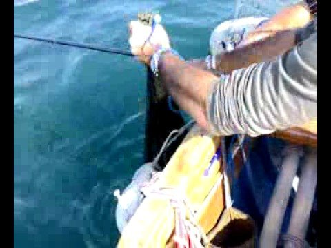 Video che pesca grayling nellinverno di video