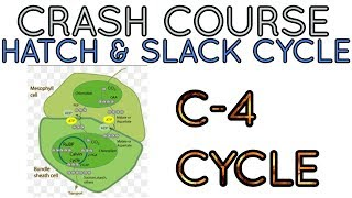 C4 CYCLE/ Hatch and Slack pathway for NEET/AIIMS/JIPMER-Crash Course.
