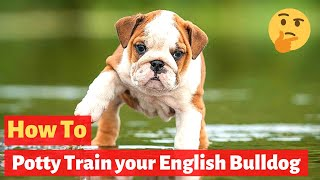 How to potty train an English bulldog? Easiest Training method...