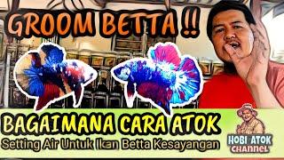 🔴 Empat Cara Terbaik Atok Groom Ikan Betta /Cupang Kesayangan.