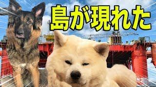 大事件!大きな島が突然現れた・河川散策の秋田犬・シェパード犬The Rainy Season