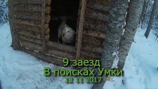 9 заезд  В поисках Умки 12 11 2017