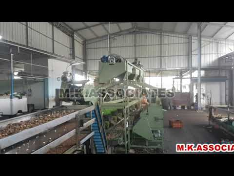 Fully Automatic Cashew Cutting Plant