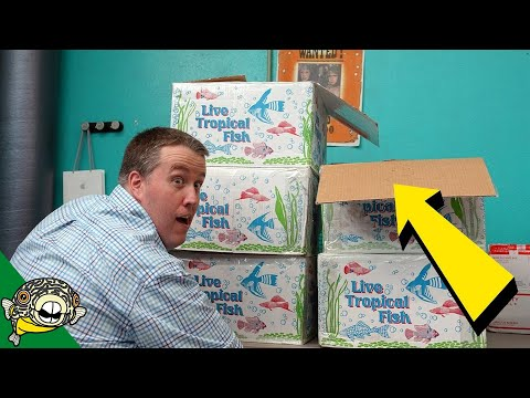 Dang, THOSE came in big. Tropical Fish Unboxing