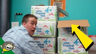 Dang, THOSE came in big. Tropical Fish [Unboxing]