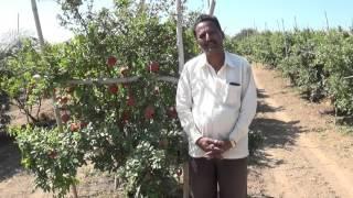 Gholegaon Ramesh Meher Blast