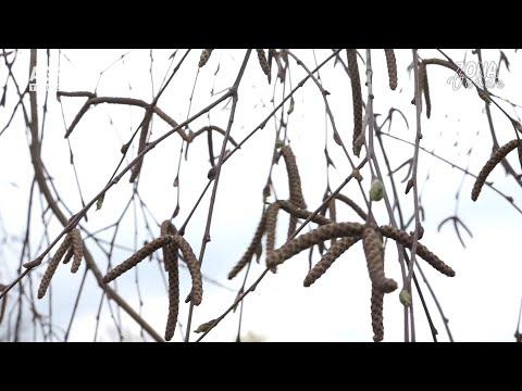 Venele cu vene varicoase