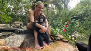 How to take care of a newborn baby CHIMPANZEE