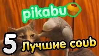 Лучшие coub по версии PIKABU. Часть 5