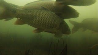 Рыбалка на зимовальной яме штраф