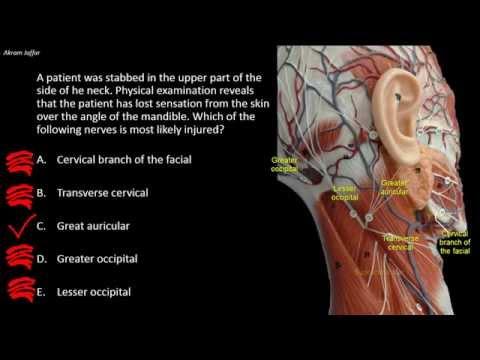 Nerwy skórne szyi: anatomia stosowana.
