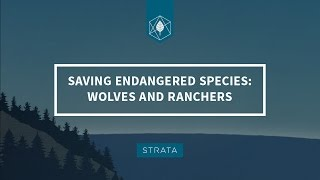 Saving Endangered Species: Wolves and Ranchers in the West