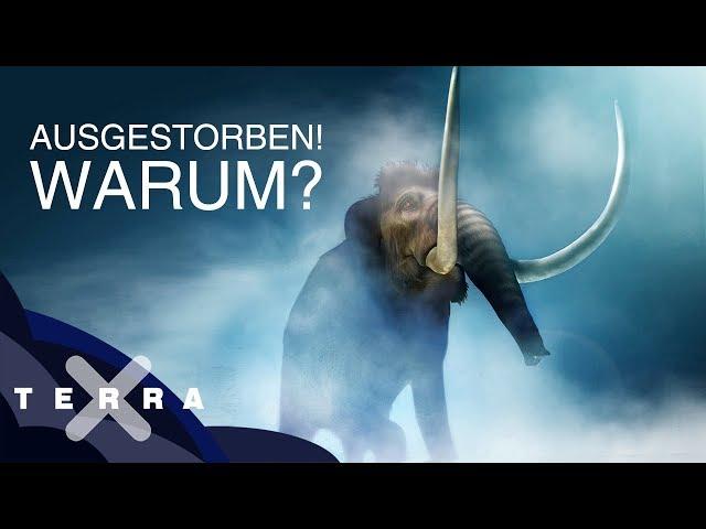 Video Aussprache von Mammut in Deutsch