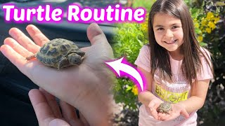 How I take Care of My New Pet Turtle | My Daily Turtle Routine | EMSY DIY