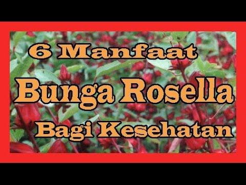 Video 6 Manfaat Bunga Rosella Bagi Kesehatan