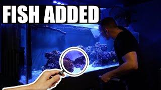 Pouring clownfish into my aquarium - The king of DIY saltwater fish tank