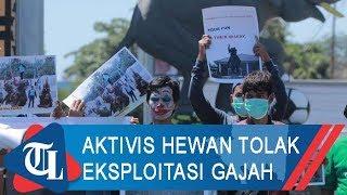 Aktivis Hewan Tolak Eksploitasi Gajah untuk Festival Way Kambas 2019