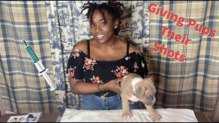 How To Give Puppies Their Shots | 6 Week Old American Bully Pups