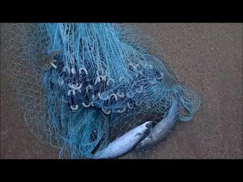 Le caratteristiche la pesca nazionale 2 per aspettare in linea