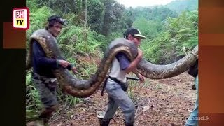Penemuan 'Anaconda Sarawak' | Kholo.pk