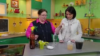 """Чем подкормить рассаду: биококтейль, """"Сияние 2"""", вермикулитовый чай"""