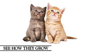See How They Grow | Cats