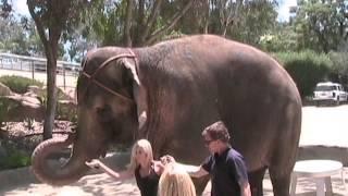 Воды Слонам (Water for Elephants), Воды слонам - Главная Звезда