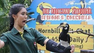 Hornbills vs Humans [The Reluctant Zookeeper Ep 5]